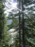 Alpi svizzere di estate Fotografia Stock