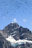 Alpi svizzere: gli uccelli nevosi di volo e di Wetterhorn Immagini Stock