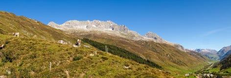 Alpi svizzere, mucca sul Mountain View Fotografie Stock Libere da Diritti