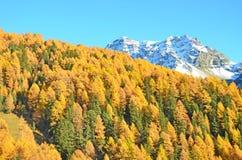 Alpi svizzere nella caduta Immagini Stock