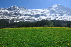 Alpi svizzere in primavera Fotografie Stock