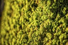 Alpi verdi della Baviera del muschio Fotografia Stock Libera da Diritti