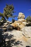 Alpien Bos dichtbij San Jacinto Peak, Palm Springs stock afbeelding