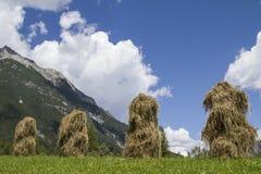 Alpien droog hooi stock foto