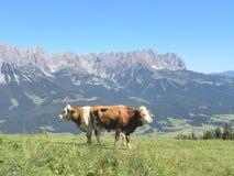 Alpien duw-me-trekkracht-u Stock Foto's