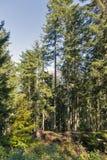 Alpien hout in Westelijke Carinthia, Oostenrijk Stock Foto's