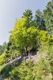 Alpien hout in Westelijke Carinthia, Oostenrijk Stock Afbeelding