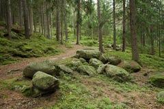 Alpien kreupelhout Royalty-vrije Stock Afbeeldingen