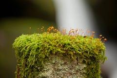 Alpien kreupelhout: mos in voorgrond en een kleine waterval op achtergrond Royalty-vrije Stock Afbeelding