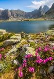 Alpien landschap in de zomer, in de Transylvanian-Alpen Royalty-vrije Stock Afbeeldingen