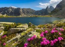 Alpien landschap in de zomer, in de Transylvanian-Alpen Stock Foto