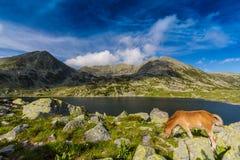 Alpien landschap in de zomer, in de Transylvanian-Alpen Royalty-vrije Stock Foto