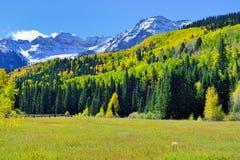 Alpien landschap en sneeuw behandelde bergen tijdens gebladerteseizoen Royalty-vrije Stock Afbeeldingen