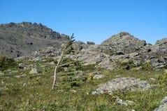 Alpien landschap met gebogen lariks stock fotografie