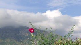 Alpien landschap met rode bloem stock videobeelden