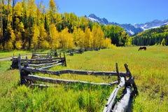 Alpien landschap met sneeuw behandelde bergen en gele esp tijdens gebladerteseizoen Stock Afbeeldingen