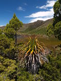 Alpien landschap in MT- gebieds nationaal park Stock Afbeeldingen