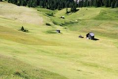 Alpien weiland Royalty-vrije Stock Afbeelding