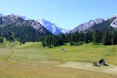 Alpien weiland 3 Royalty-vrije Stock Afbeeldingen