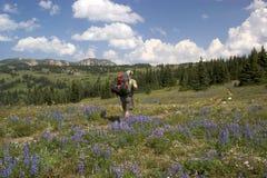 Alpiene backpacker Stock Foto's