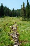 Alpiene bos en weide Royalty-vrije Stock Foto