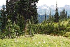 Alpiene bossen en weiden stock foto's