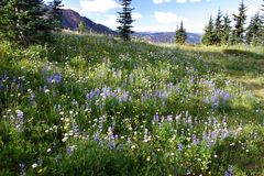 Alpiene de lente Royalty-vrije Stock Foto