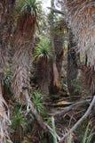 Alpiene Forrest, MT Gebied tasmanige Royalty-vrije Stock Foto