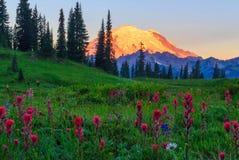 Alpiene Gloed op MT Regenachtiger, Washington State stock afbeelding