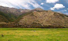 Alpiene groene weide Royalty-vrije Stock Afbeelding