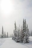 Alpiene helling met pijnboomboom stock afbeeldingen