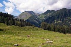 Alpiene landschap en koeien Stock Foto