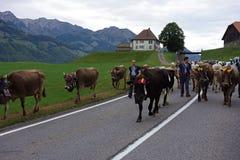 Alpiene Melkkoeparade in Zwitserland stock foto's
