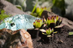 Alpiene tuin met steenrozen en blauw glas royalty-vrije stock afbeeldingen
