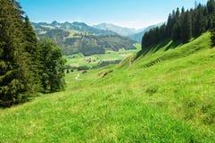 Alpiene weide royalty-vrije stock afbeeldingen