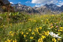 Alpiene weide Stock Afbeeldingen