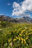 Alpiene weide Stock Afbeelding