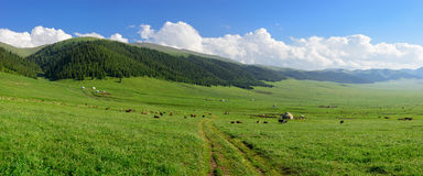 Alpiene weide bij Asy-Plateau stock fotografie