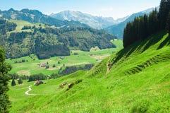 Alpiene weide in de zomer stock foto's
