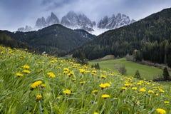 Alpiene weide met gele bloemen met Alp Mountains stock afbeeldingen