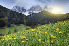 Alpiene weide met gele bloemen met Alp Mountains royalty-vrije stock afbeelding