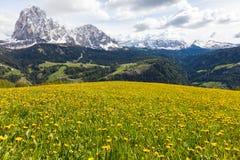 Alpiene weide met gele paardebloemenbloemen Stock Afbeelding