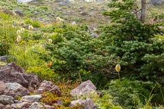 alpiene weide met kleine bomen bij regenachtiger royalty-vrije stock foto
