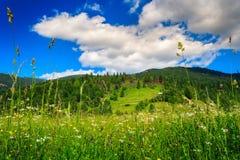 Alpiene weide met lang gras Stock Afbeeldingen