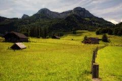 Alpiene weide onder Schafberg Stock Afbeeldingen