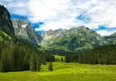 Alpiene weide in Zwitserland Stock Fotografie