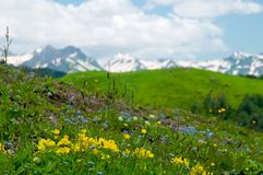 Alpiene weiden royalty-vrije stock fotografie