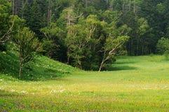 Alpiene weiden Royalty-vrije Stock Foto's