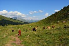 Alpiene Weiden Stock Afbeeldingen