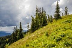 Alpiene weiden die het landschap van parkcanada in de zomer bemannen Stock Foto